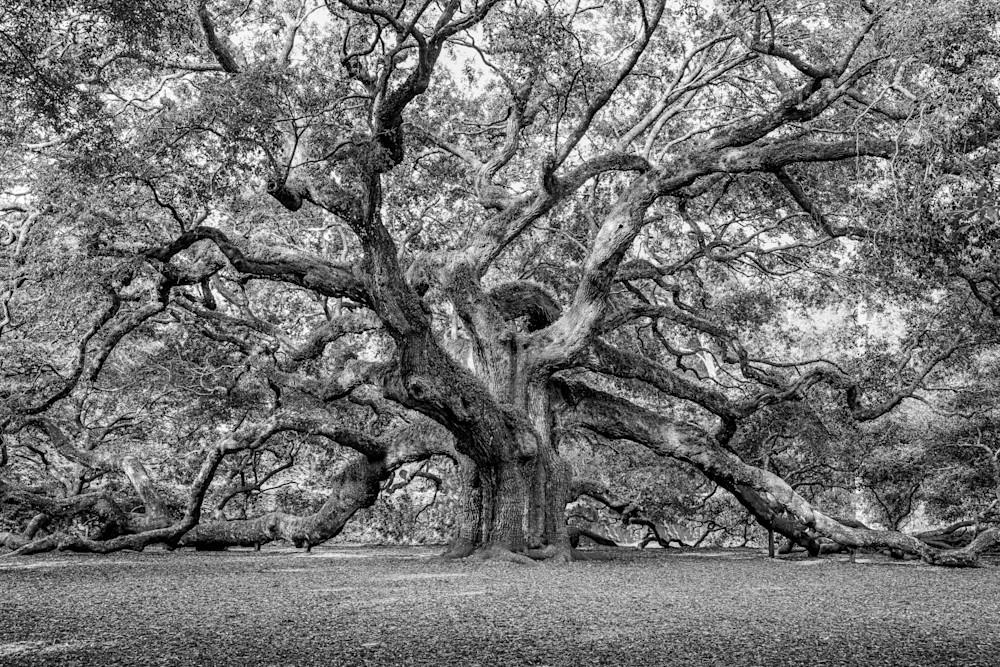 angel-oak-tree-02