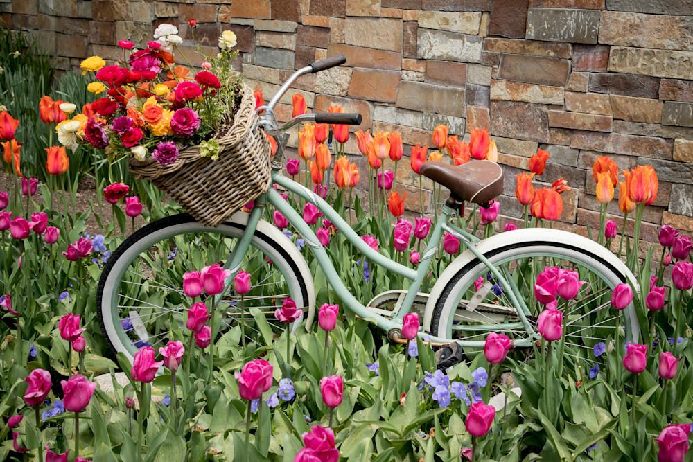 The Tulip Bike