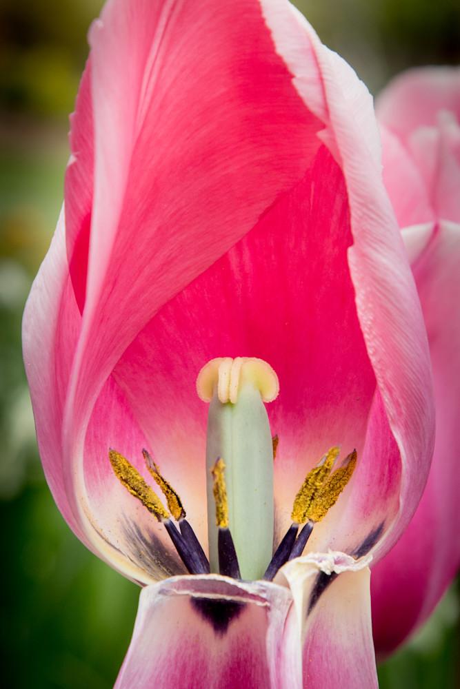 Inside the Tulip