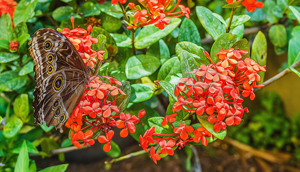 Butterfly On Red Photography Art | draphotography