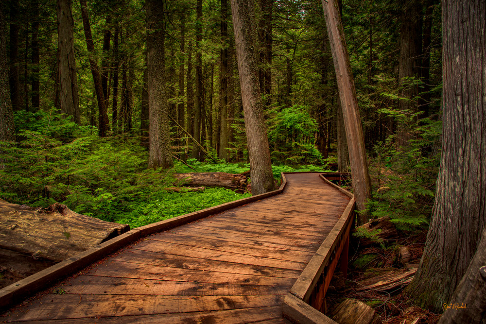 Trail of the Cedars-glacier National Park