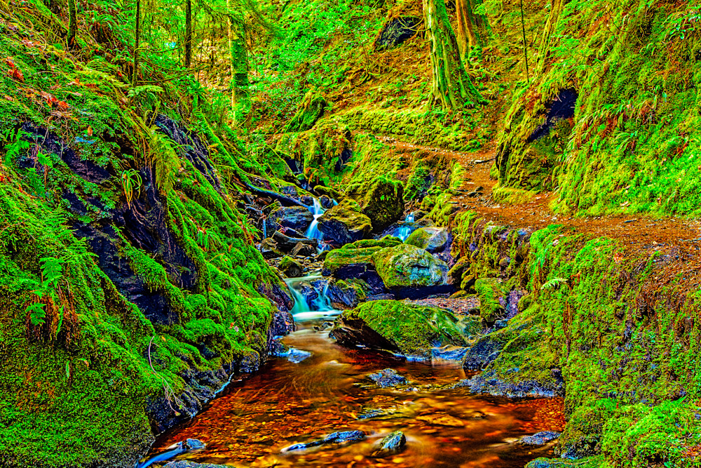Puck's Glen 1 - Art of Scotland Print By Christopher Gatelock