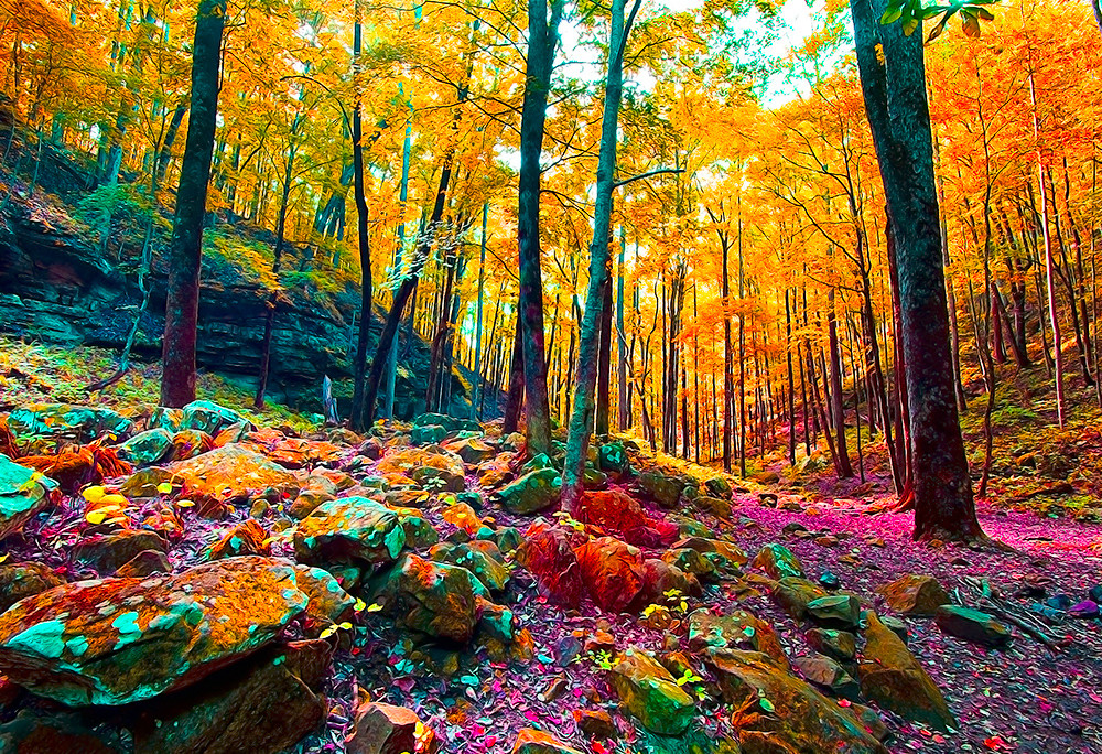 Surreal Forest - Art of Tennessee Print By Christopher Gatelock