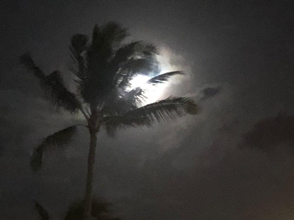 Palm & Moonlight Photography Art | Brian Ross Photography