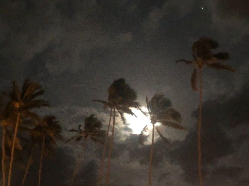 Palms & Moon Photography Art | Brian Ross Photography