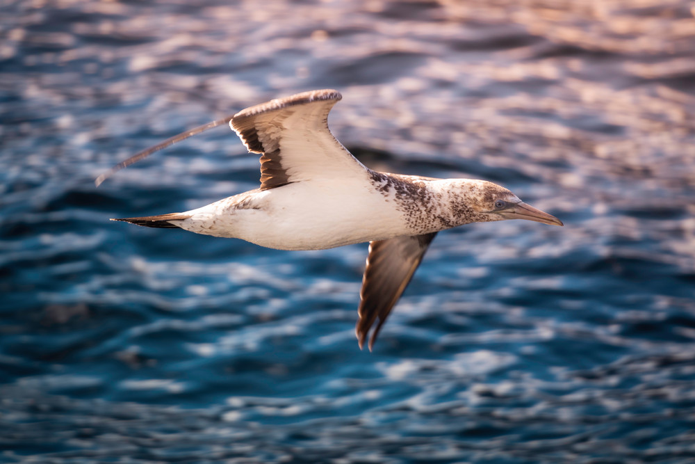 'Gulls & Sounds' Photograph by Jess Santos for sale as Fine Art