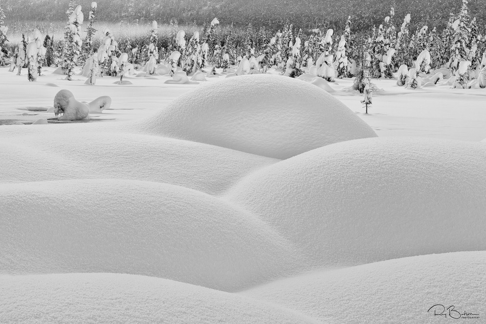 Deep snow over vegetation creates artistic mounds surrounding the hot springs with boreal forest in background in Chugach State Park at Eagle River Nature Center in Southcentral Alaska. Winter. Afternoon.