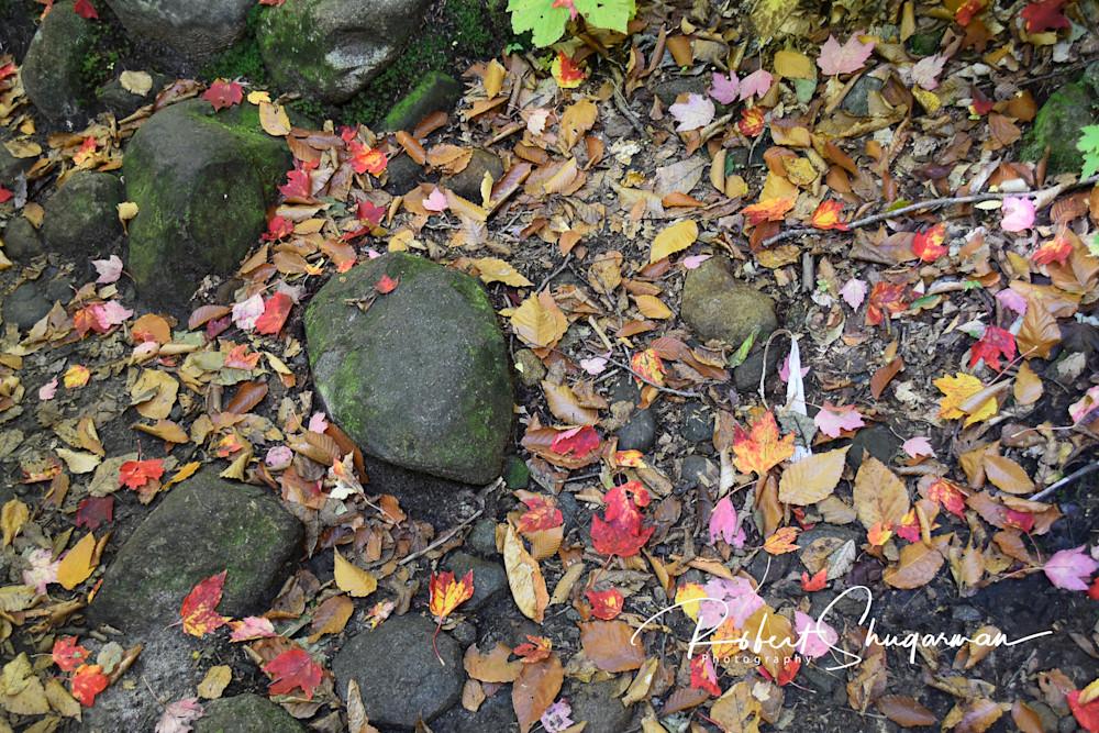 Fall Leaves and Rocks | Shop Prints | Robert Shugarman Photography