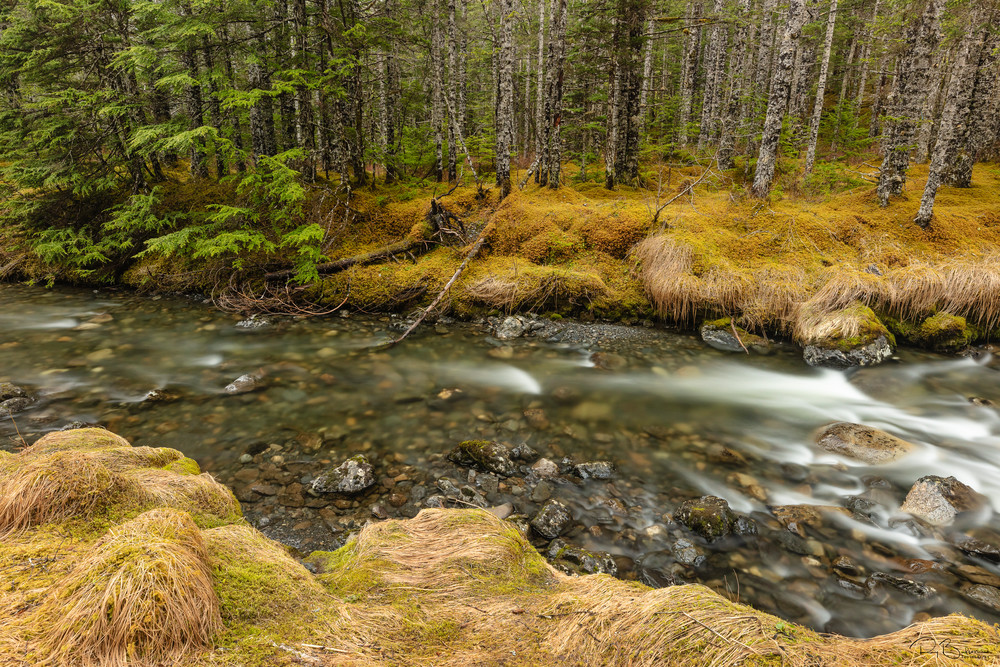 A mountain stream in the Chugach National Forest near Cordova in Southcentral Alaska. Spring. Morning.