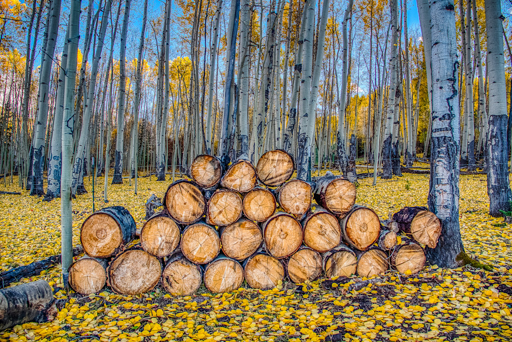 Logs in the fall