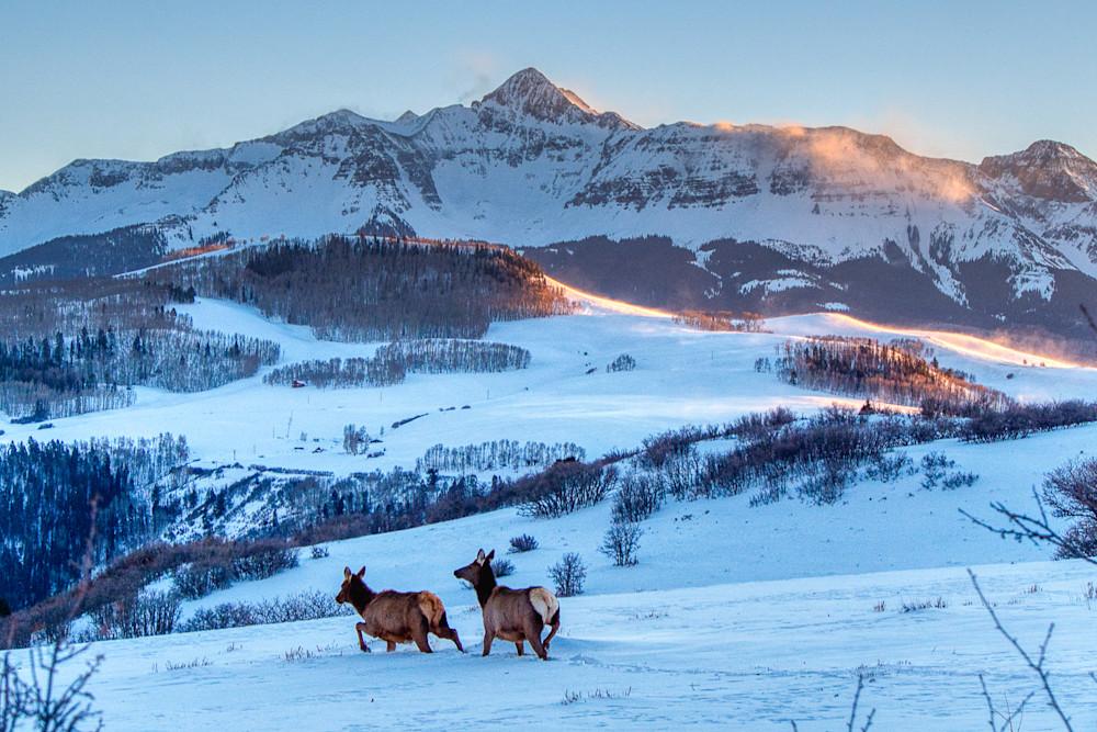 Elk by Wilson Peak