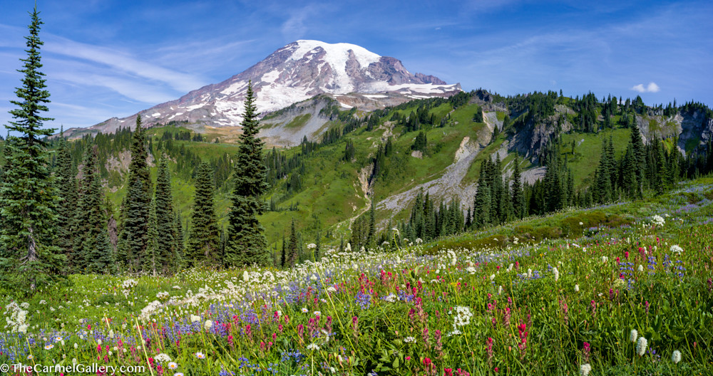 Summer Panorama, Mount Rainier Art | The Carmel Gallery