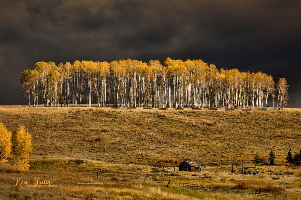 Aspen Before the Storm 5744 Photograph, | Fall Colorado Photography |Fine Art Photography by Koral Martin