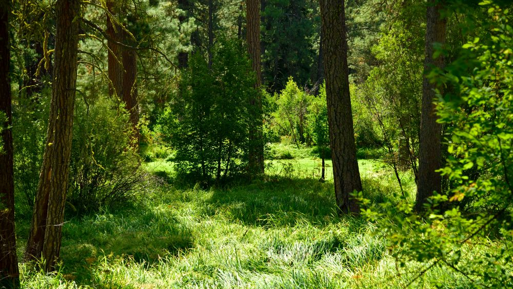 Metolius Meadow