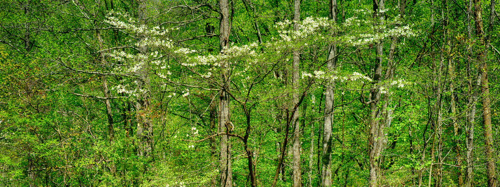 Dogwood Holler Photography Art | Craig Primas Photography
