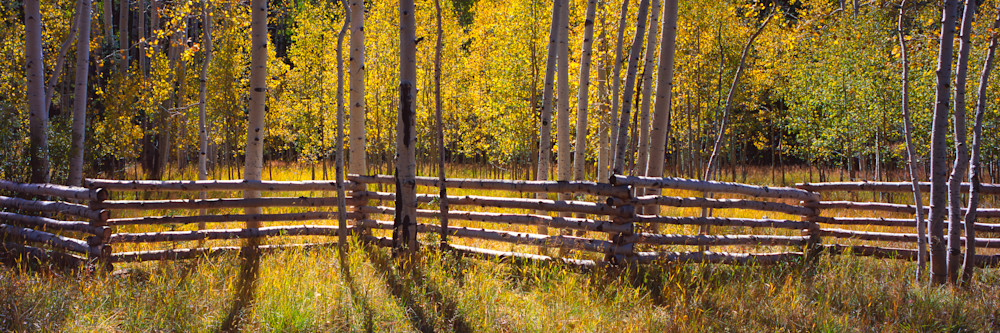 Aspen Fence Photography Art | Craig Primas Photography
