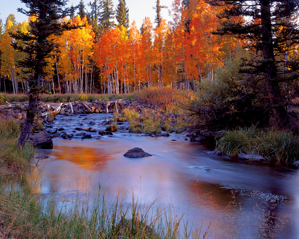 Autumn Creek Glow Photography Art | Craig Primas Photography