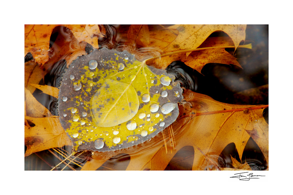 Signed photo by Nat Geo photographer of a floating leaf with raindrops.