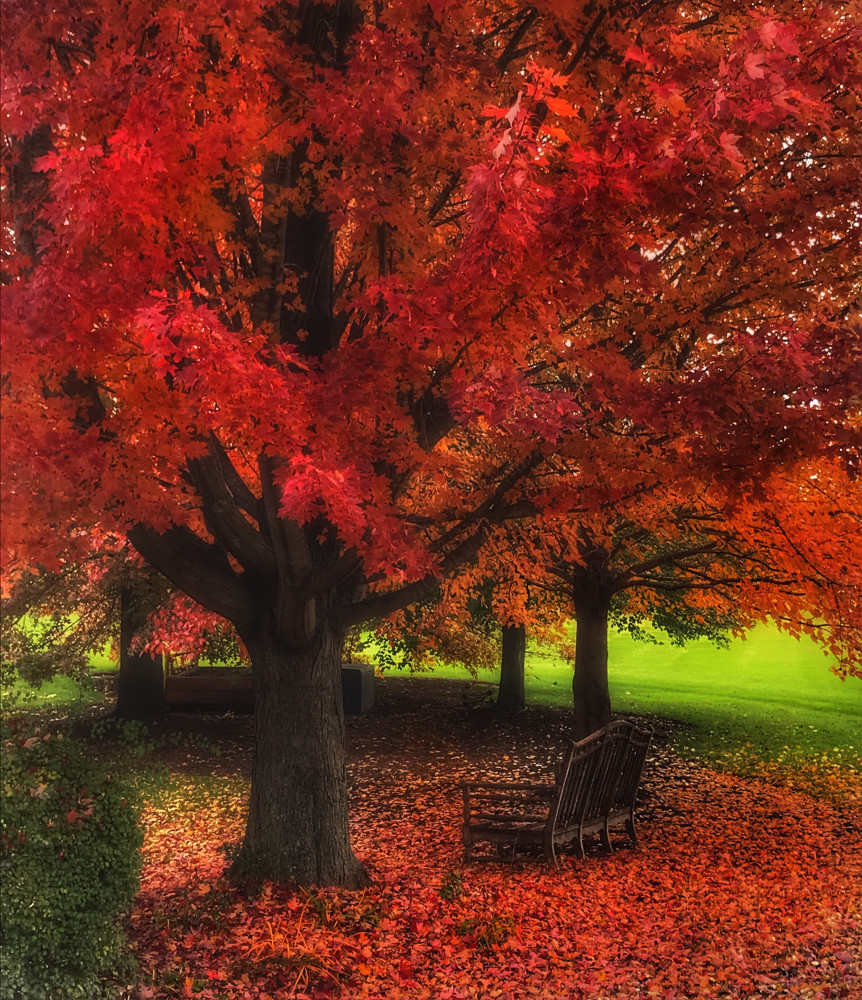 Red Autumn by Mike Caplan