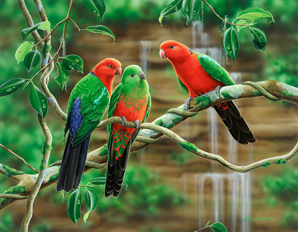 Kings of the forest - King Parrots | Australian Native Wildlife