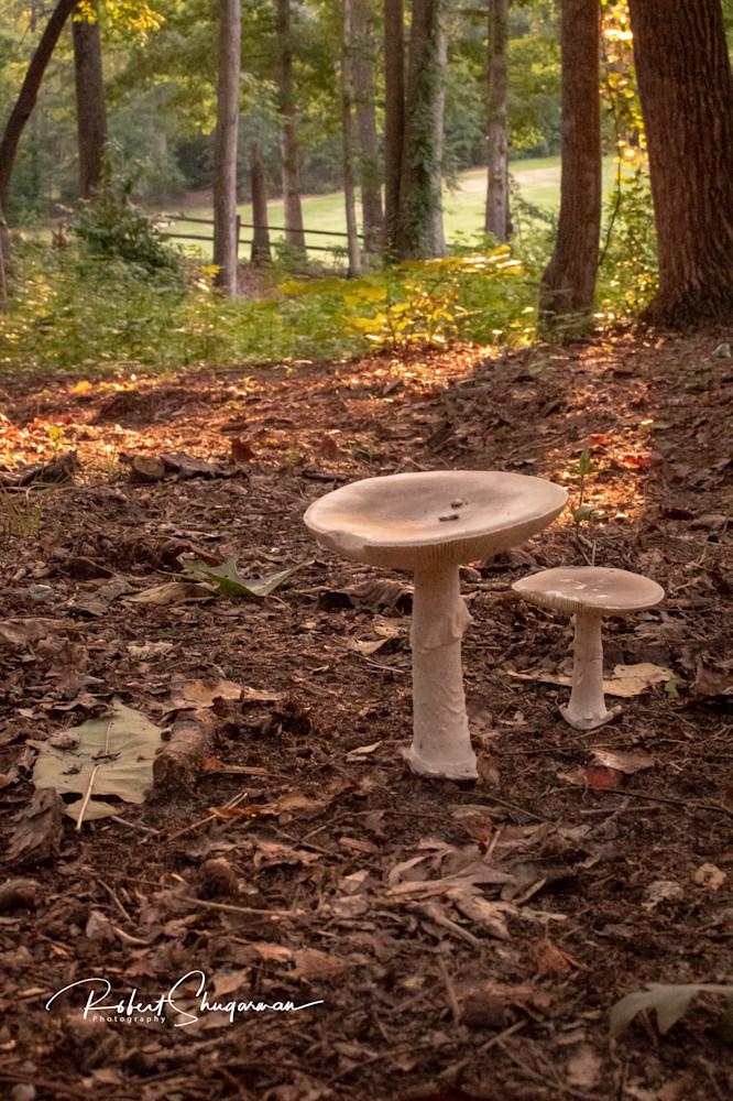 Mushroom 2   Shop Prints   Robert Shugarman Photography