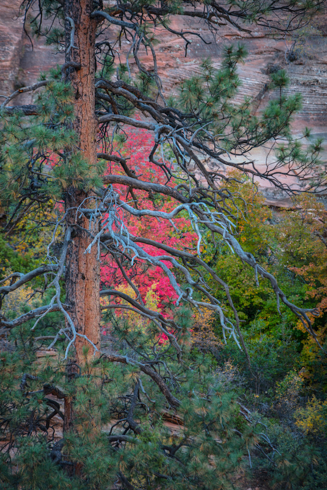 Some of the bright Fall colors hidden in Zion National Park