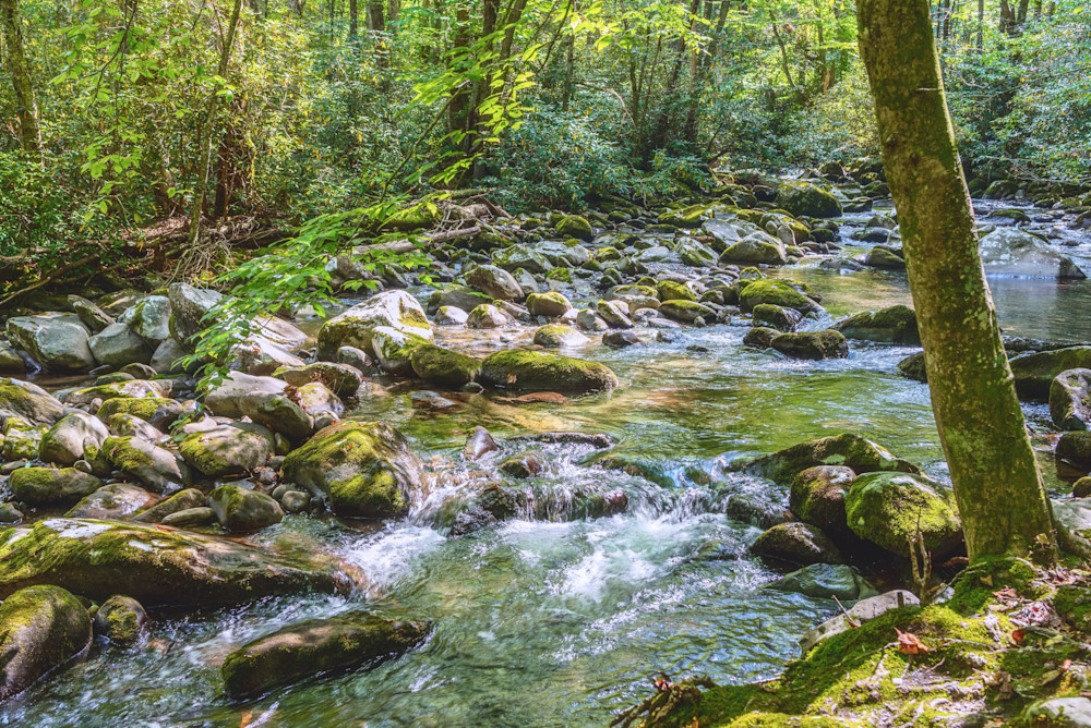 Tranquil Creek Photography Art | draphotography