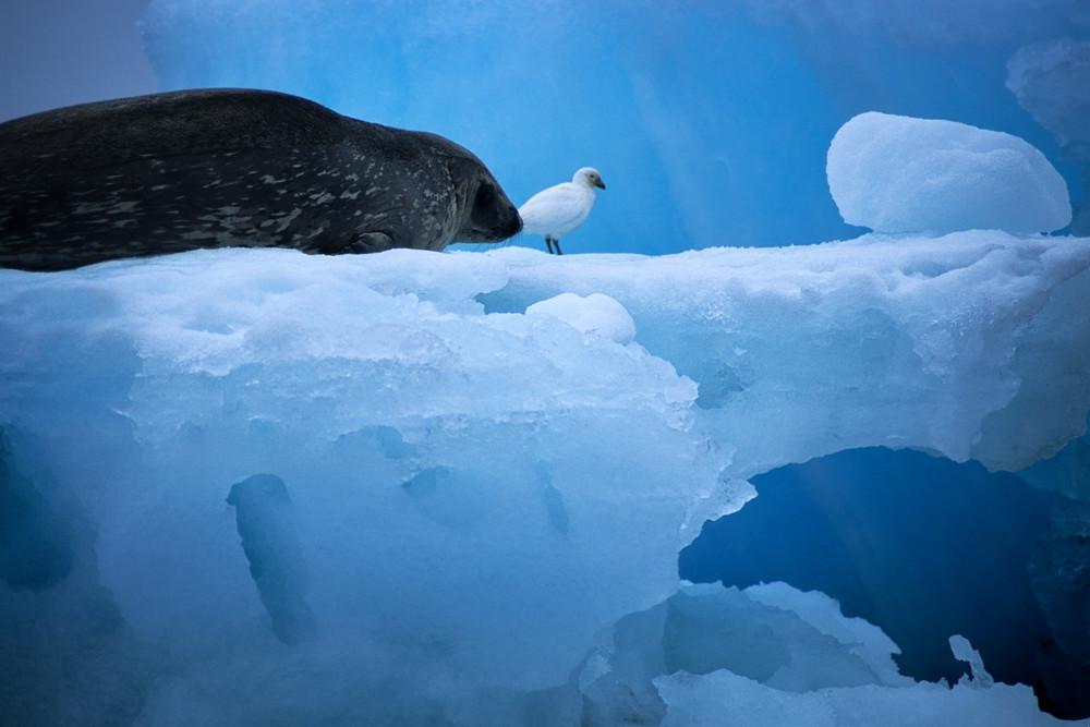 Seal With Bird Photography Art | templeimagery