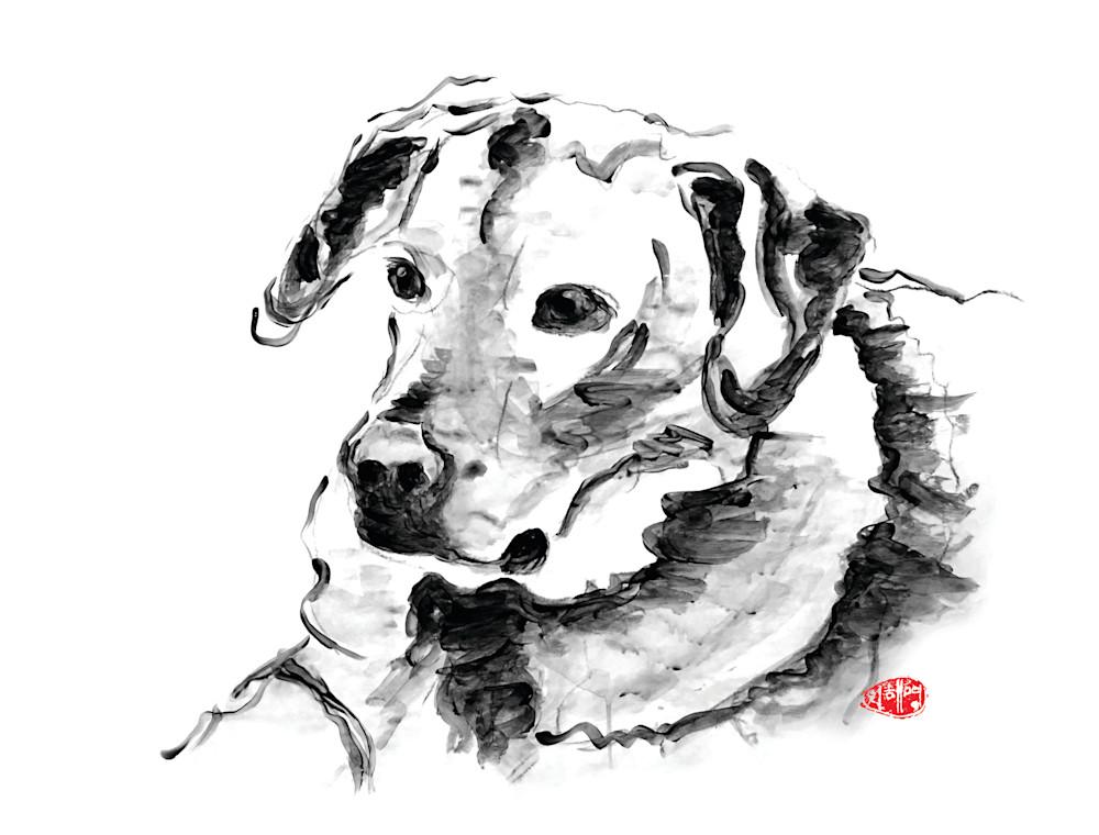 dogs, dog prints, dog canvas prints, pet portraits, black and white, Labrador