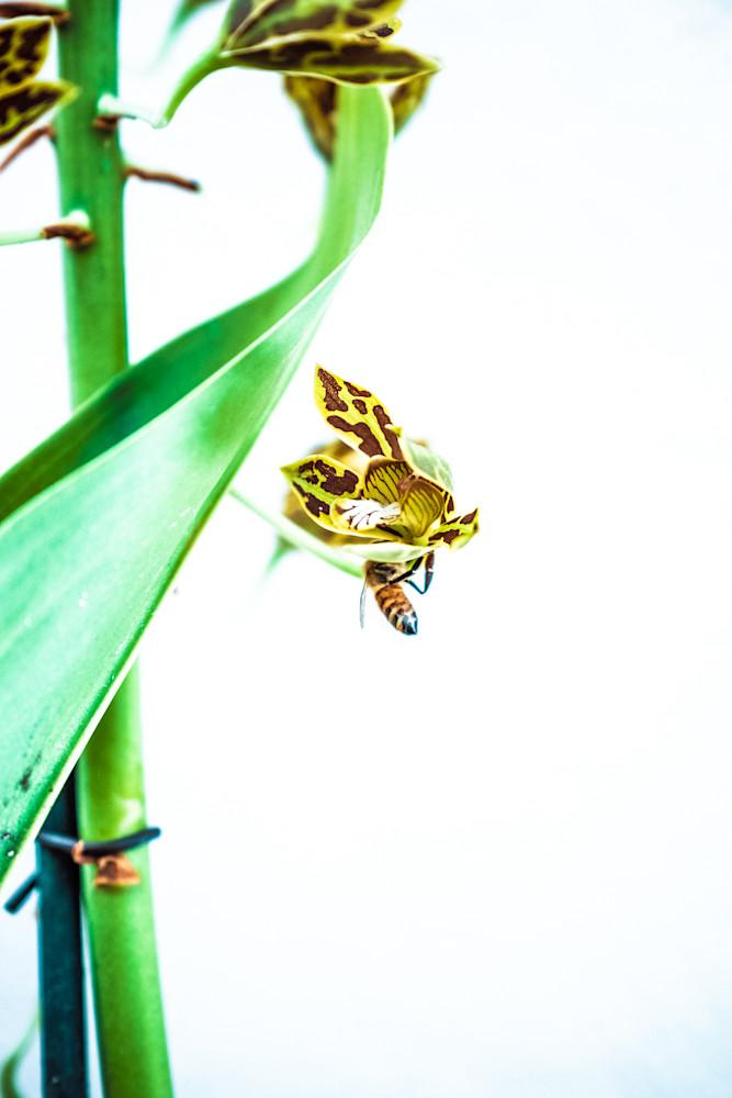 bee trap I