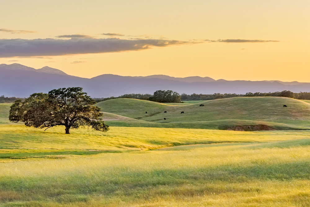 Rolling grass hlls of the central valley