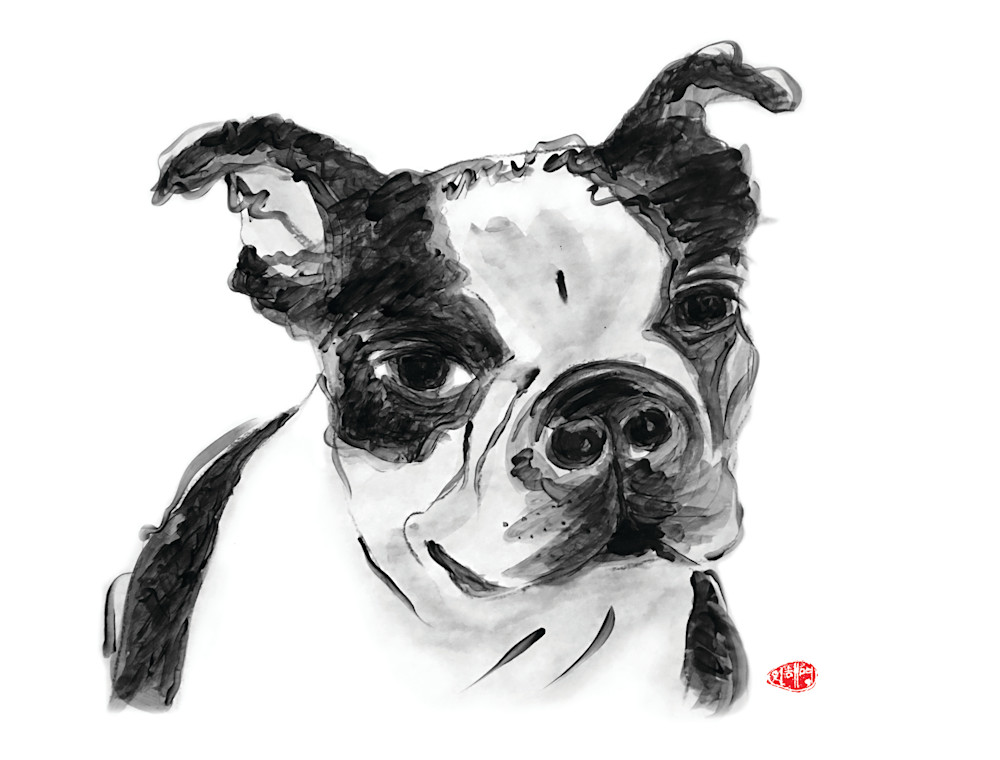 card, note card, dog card, animal lover cards, rescue dog, dog lover, boston terrier, boston terrier mix