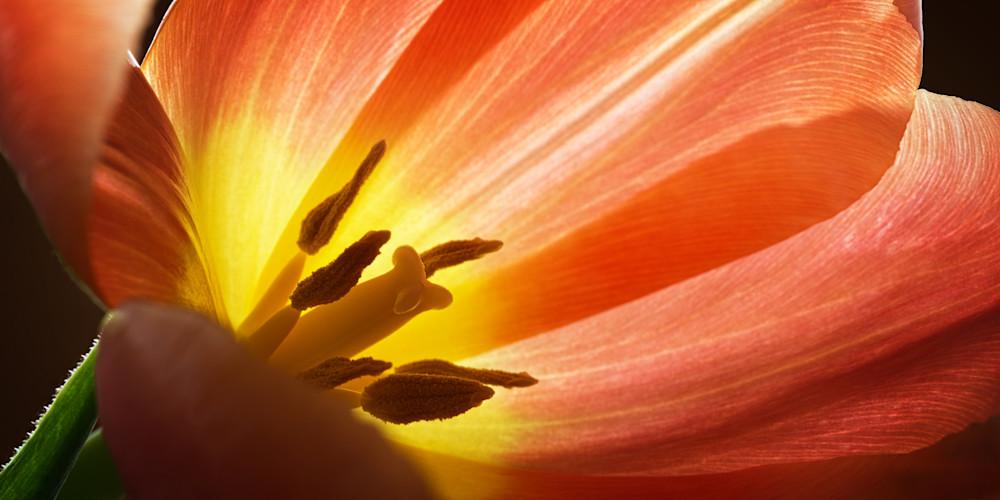 Petals Of Fire Photography Art   templeimagery