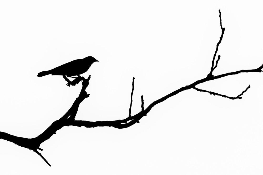 Bird Silhouette VIII