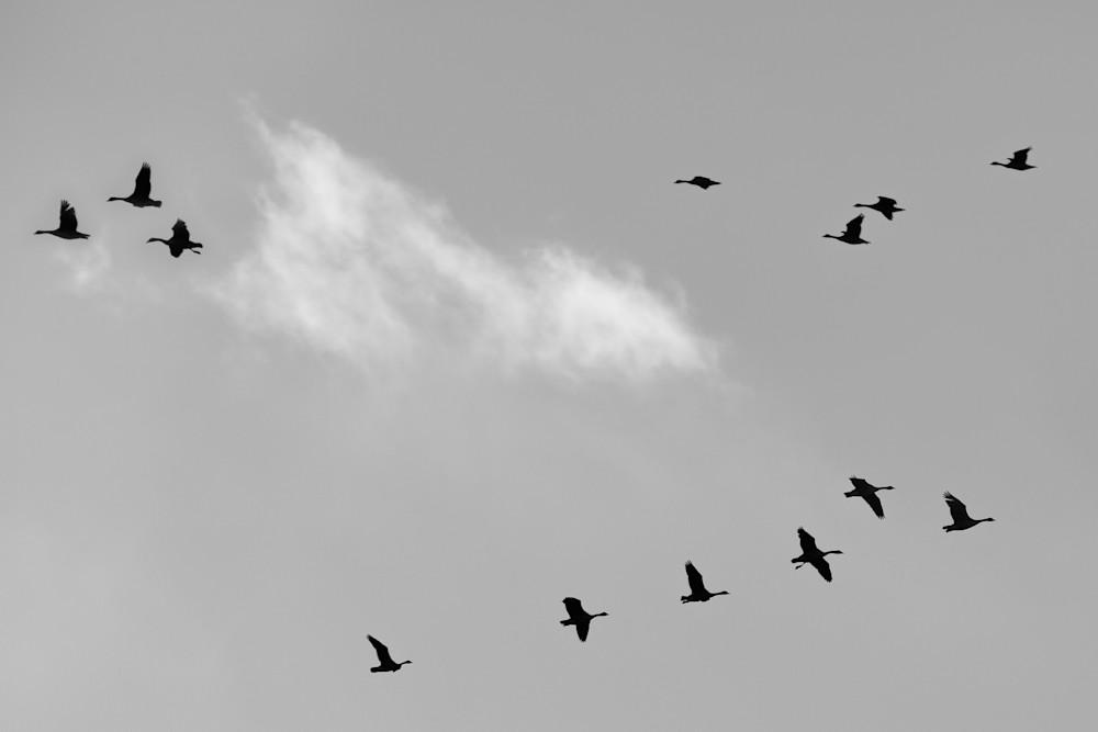 Transitions In Flight Photography Art | Nathan Larson Photography, LLC