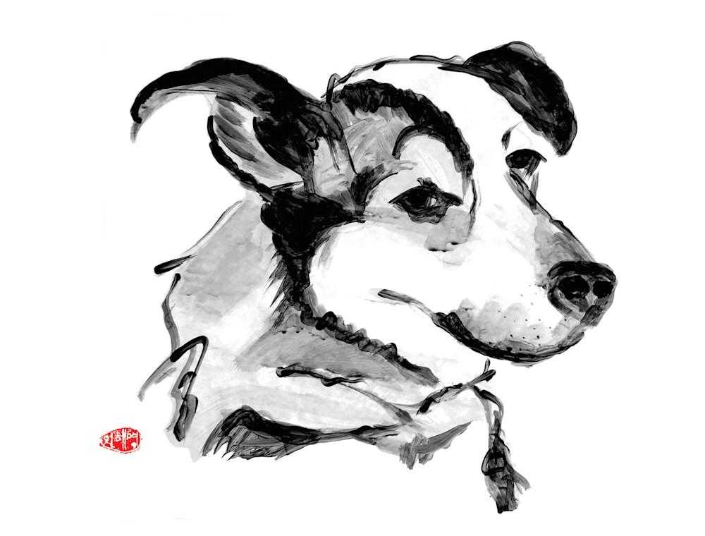 dogs, cat prints, cat canvas prints, pet portraits, australian cattle dog, australian cattledog mix, cattledog