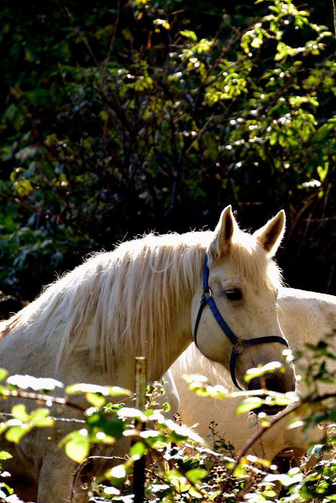 Horse Highlights