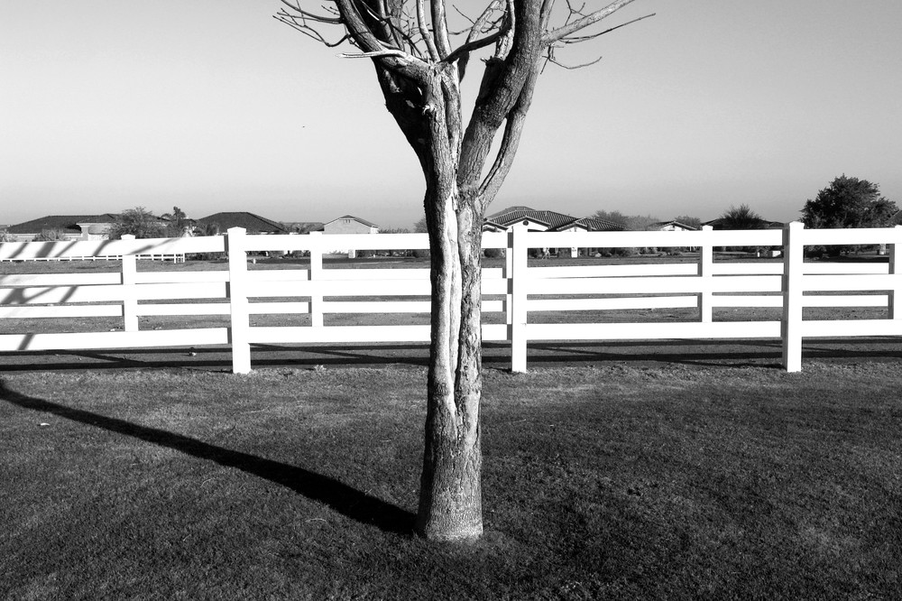 Bare Tree In Pasture Photography Art | Peter Welch