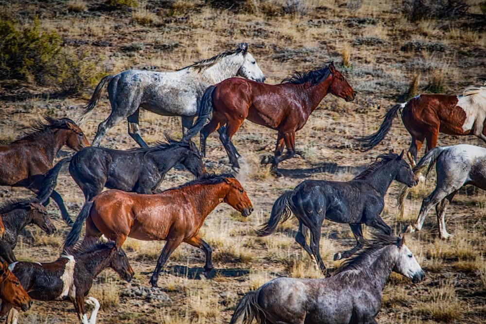 Prairie Run