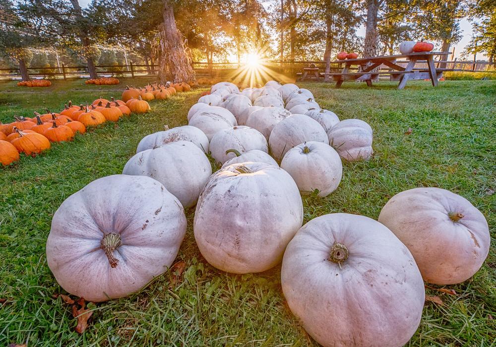 Morning Glory White Pumpkins Art | Michael Blanchard Inspirational Photography - Crossroads Gallery