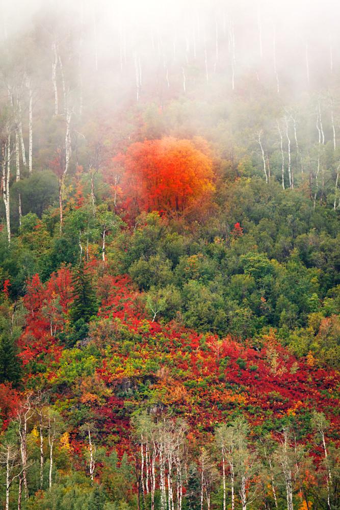 vertical autumn fog