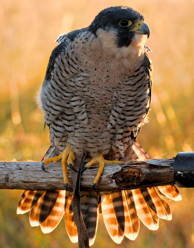 Raptors In October 9 Photography Art | Drone Video TX