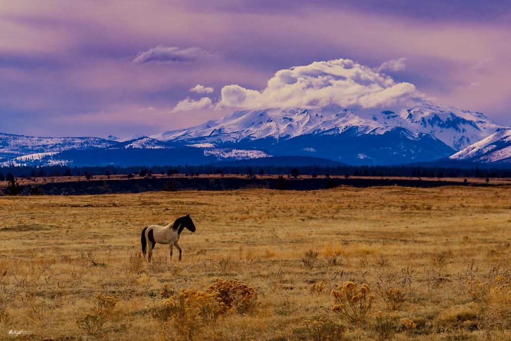 Mt. Jeffreson Lone Ranger Horse