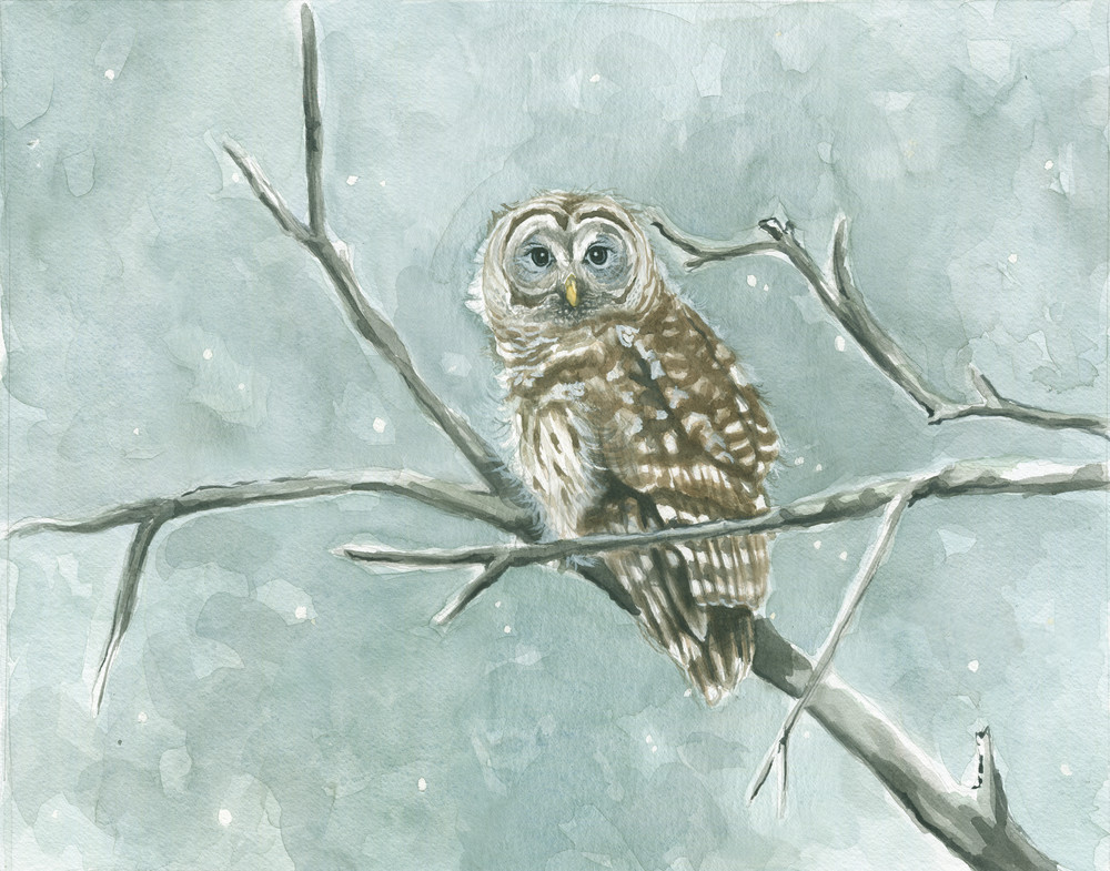 Chilly Barred Owl