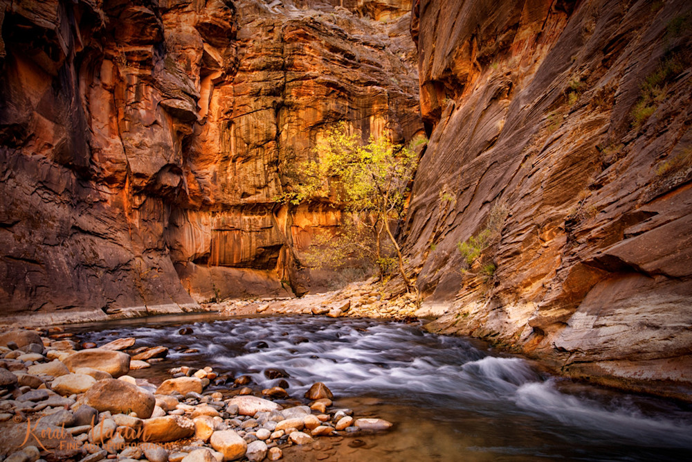 Zion  Narrows with  Fall Trees Photograph 2892 | Zion Narrows | Zion National Park | Canyon Photography | Koral Martin Fine Art Photography