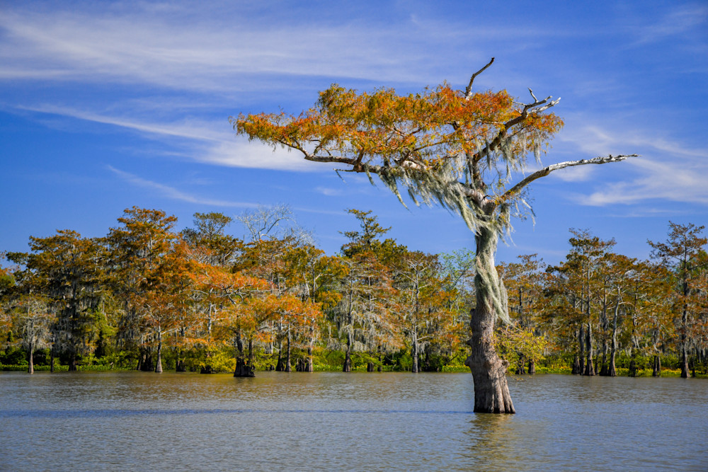 Spirit of the Swamp — Louisiana swamp photography print