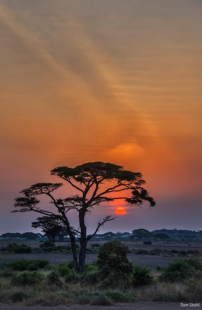 Acacia sunrise, 2016.