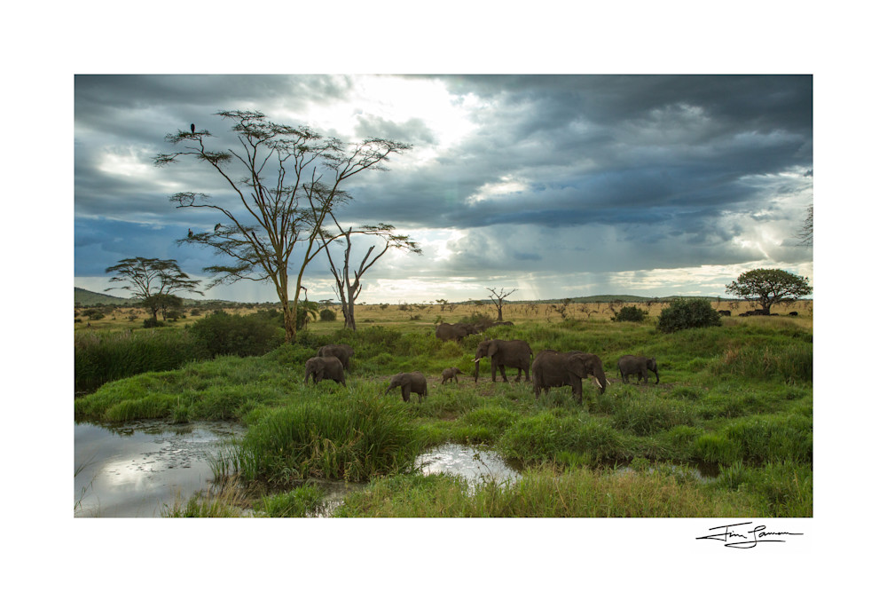 Classic Serengeti Photography Art | Tim Laman