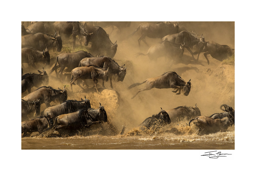 The Mara River Leap Art | Tim Laman