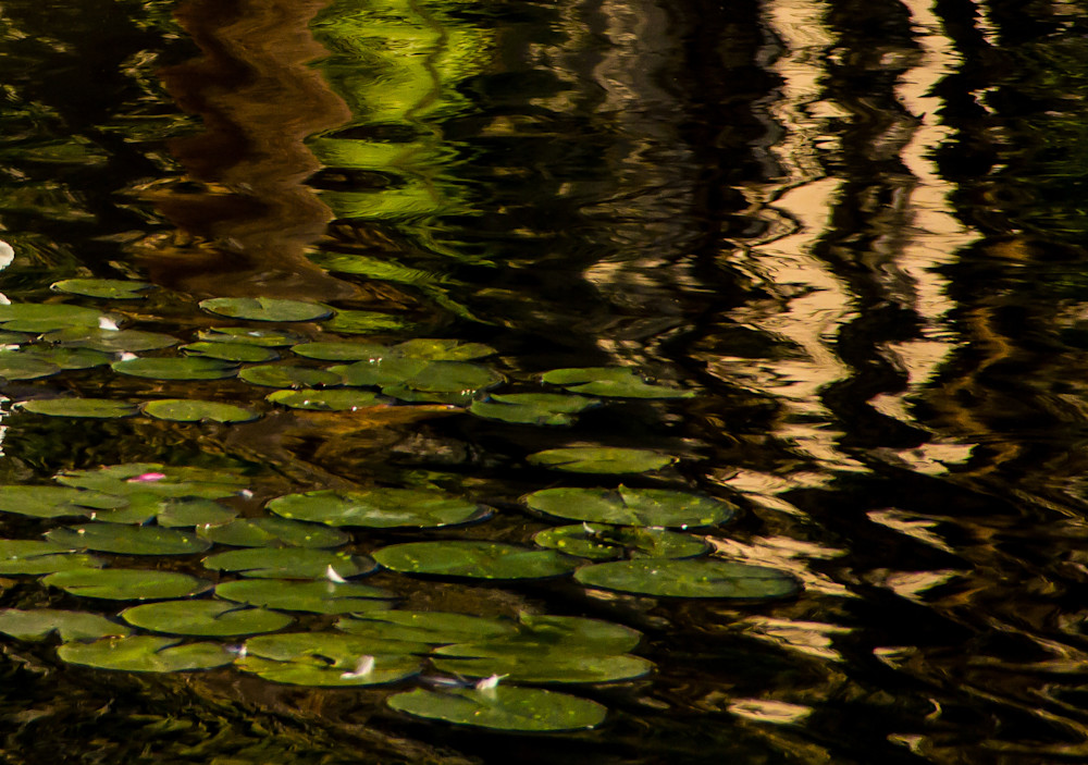 Water Lilies In The Afternoon Photography Art   Dan Katz, Inc.